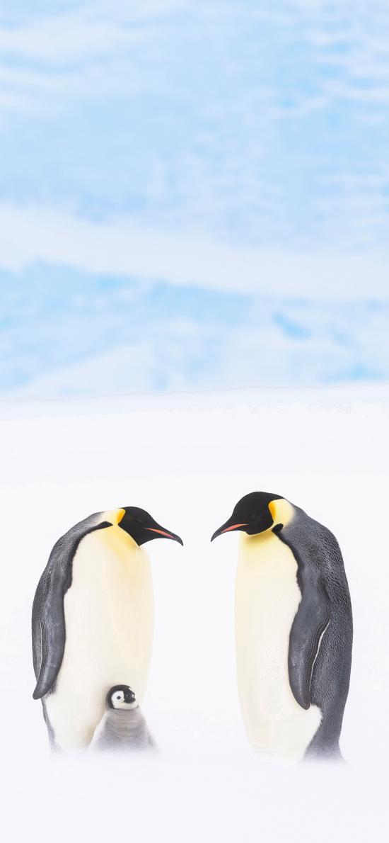 企鵝 南極 冰川 王朝紀錄片