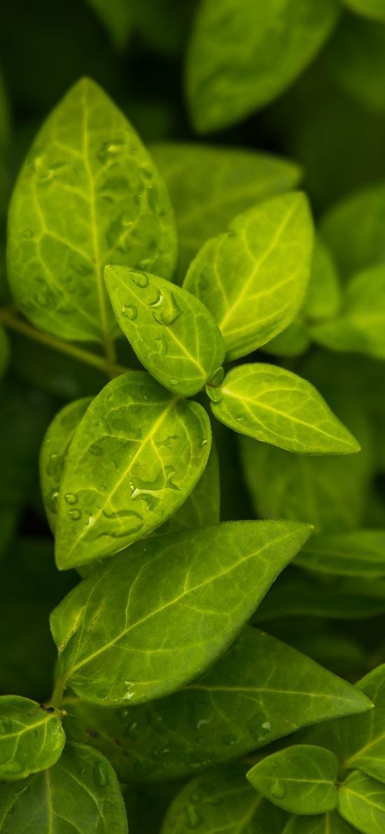葉子 綠色 植被 綠化