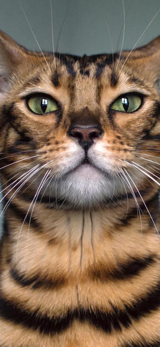 貓咪 寵物 胡須 皮毛