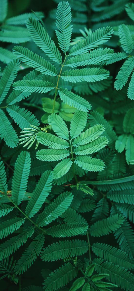 葉子 綠色 植被