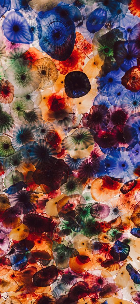 海洋生物 水母 海蜇 色彩 密集
