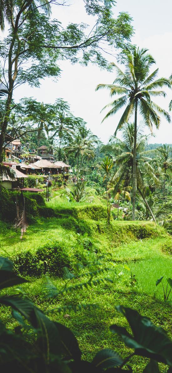 自然 景點 綠化 建筑