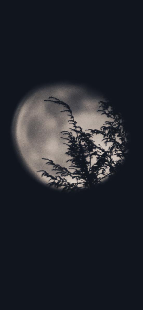 夜晚 月亮 樹木 影子 夜景