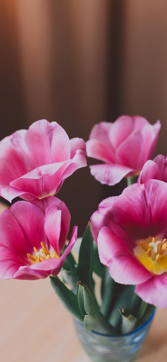 盛開 鮮花 花蕊 花朵