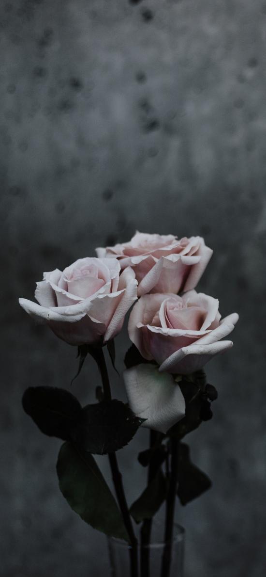 鮮花 花束 玫瑰 盛開
