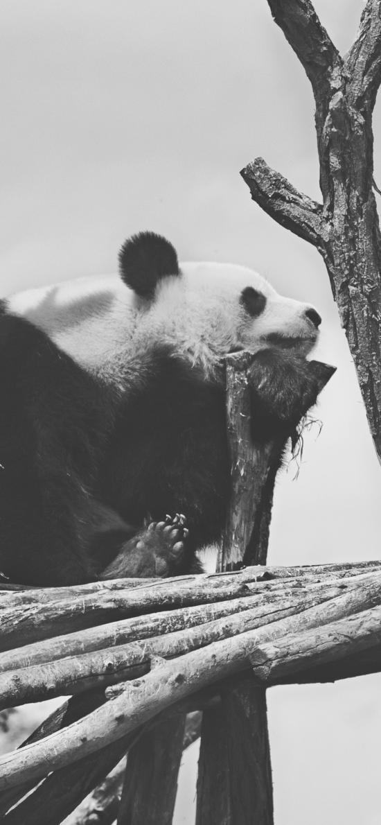 熊貓 灰白 國寶 支架