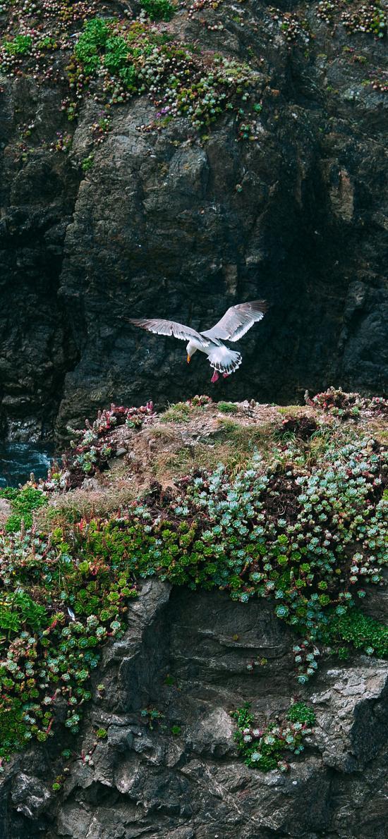 景色 飛鳥 峭壁 綠植 生長