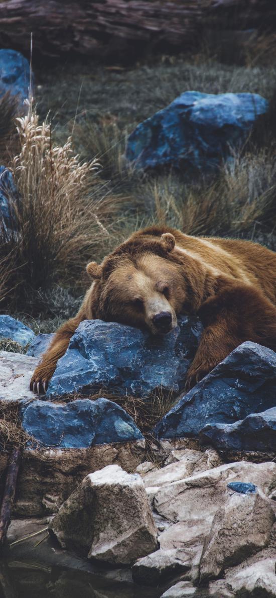 郊外 石块 棕熊 休息