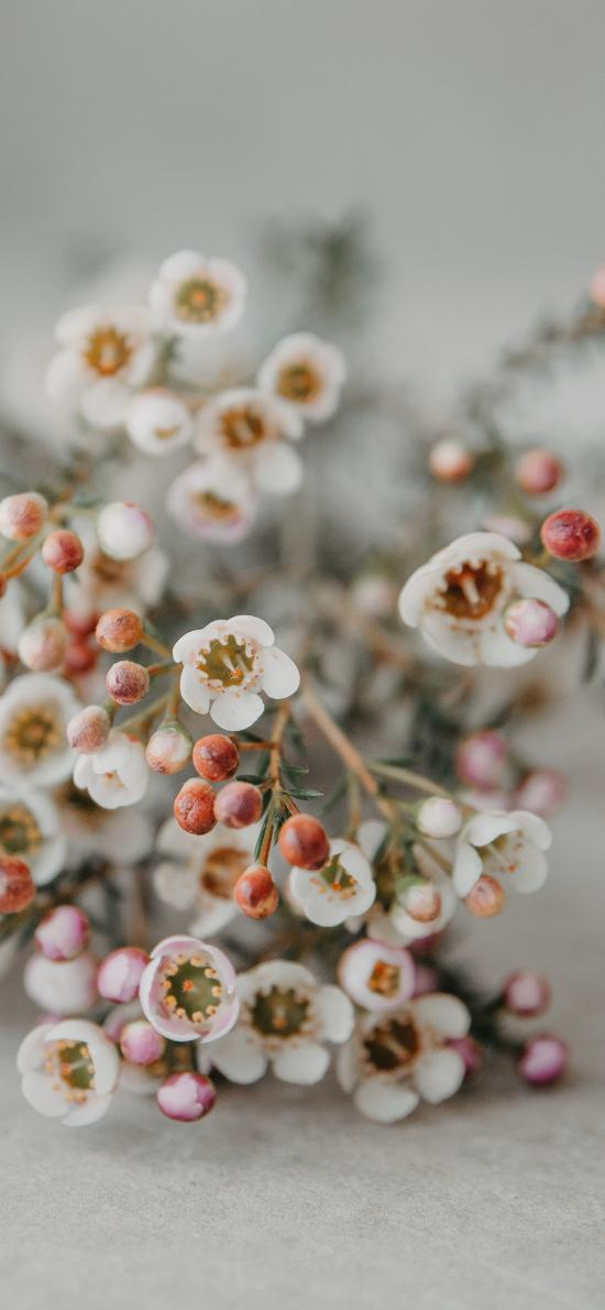 鲜花 花束 白色 小清新