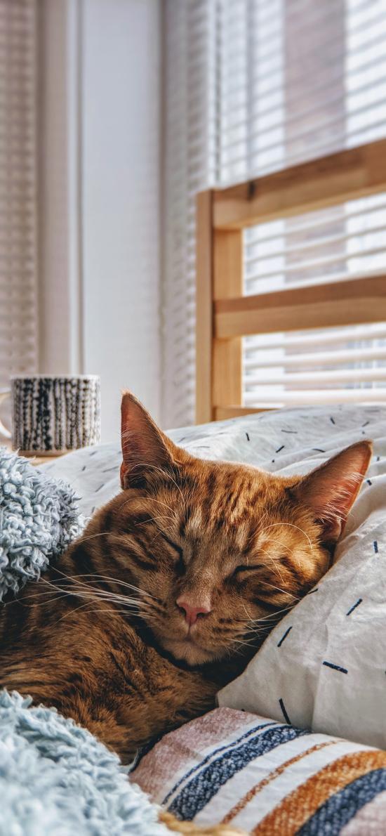 喵星人 猫咪 橘猫 睡觉
