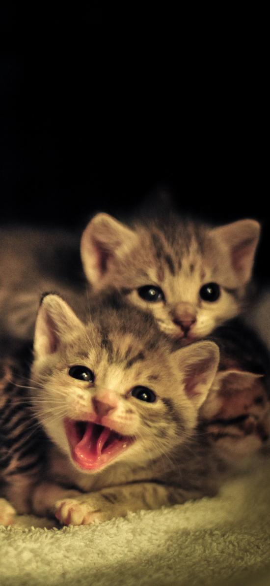 猫咪 可爱 幼仔 小猫