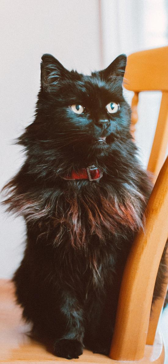 猫咪 宠物 黑猫 椅子