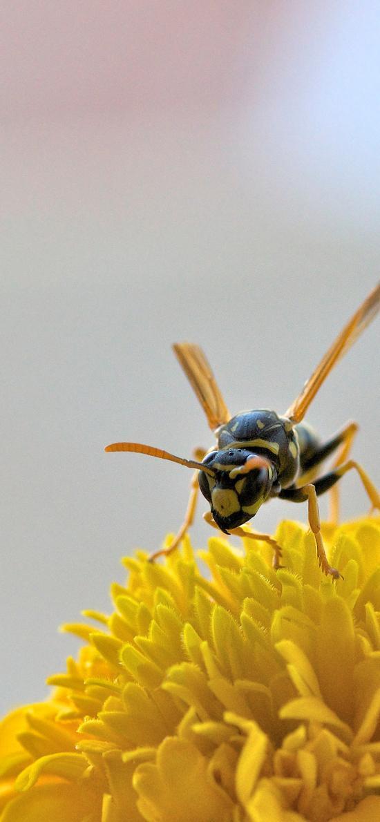 昆蟲 蜜蜂 花朵 鮮花 采蜜