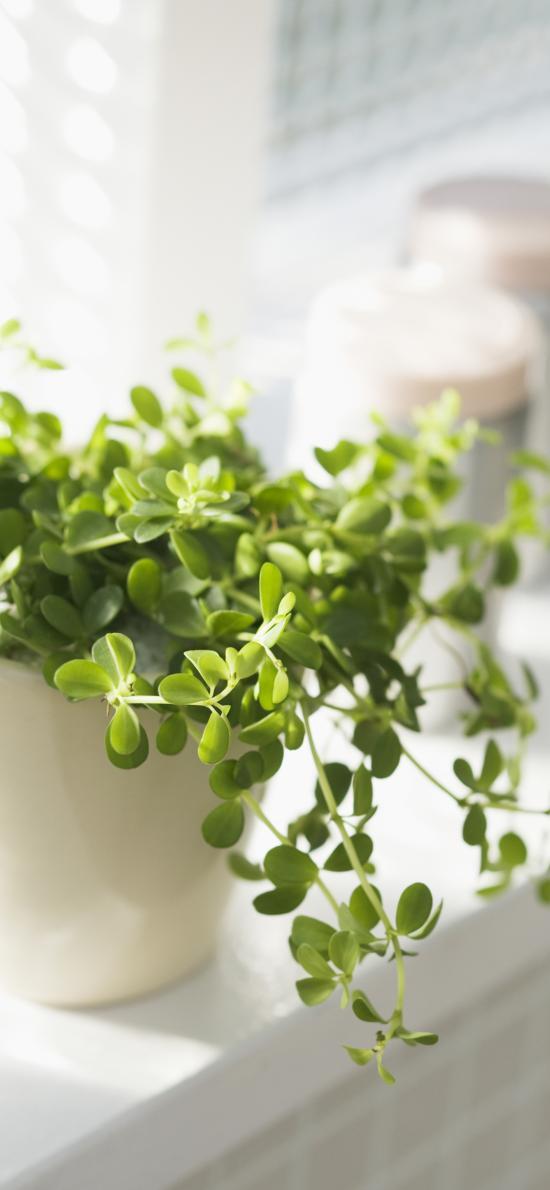 盆栽 綠植 葉子 小清新 綠化