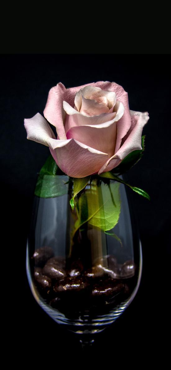 鮮花 玻璃杯 酒杯 玫瑰