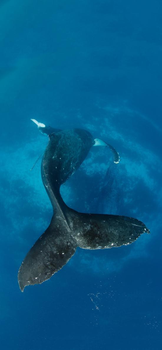 海洋生物 哺乳动物 鲸鱼 庞大