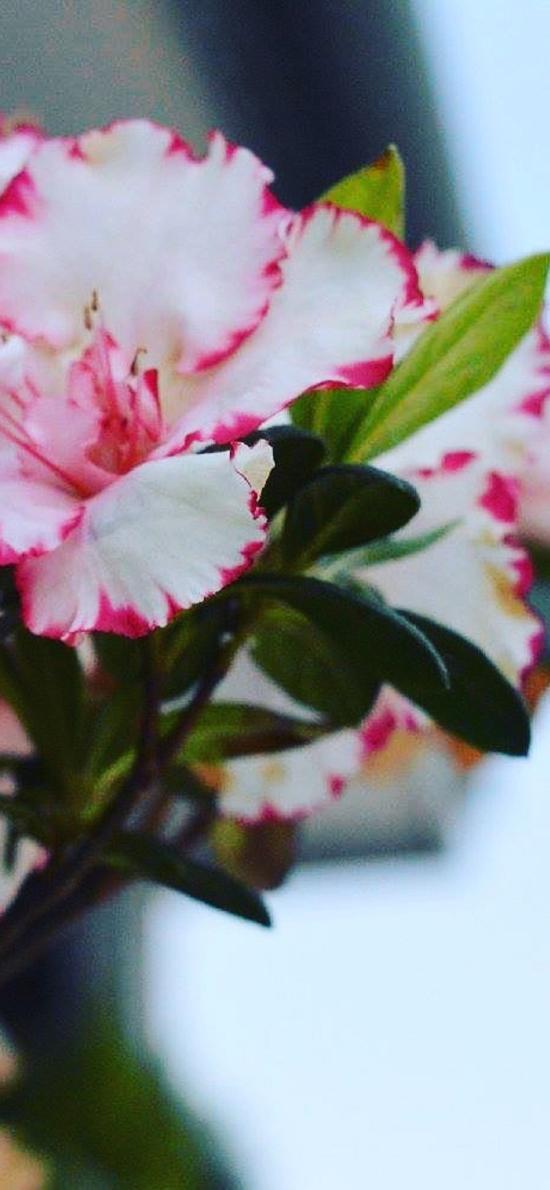 鮮花 盛開 花簇 漸變