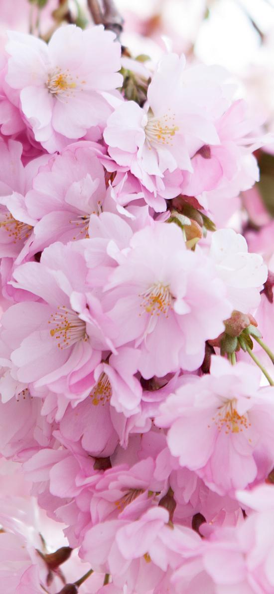 鮮花 花簇 盛開 花朵 花季