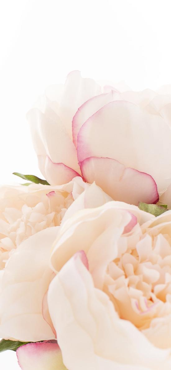 鮮花 花朵 花瓣 漸變