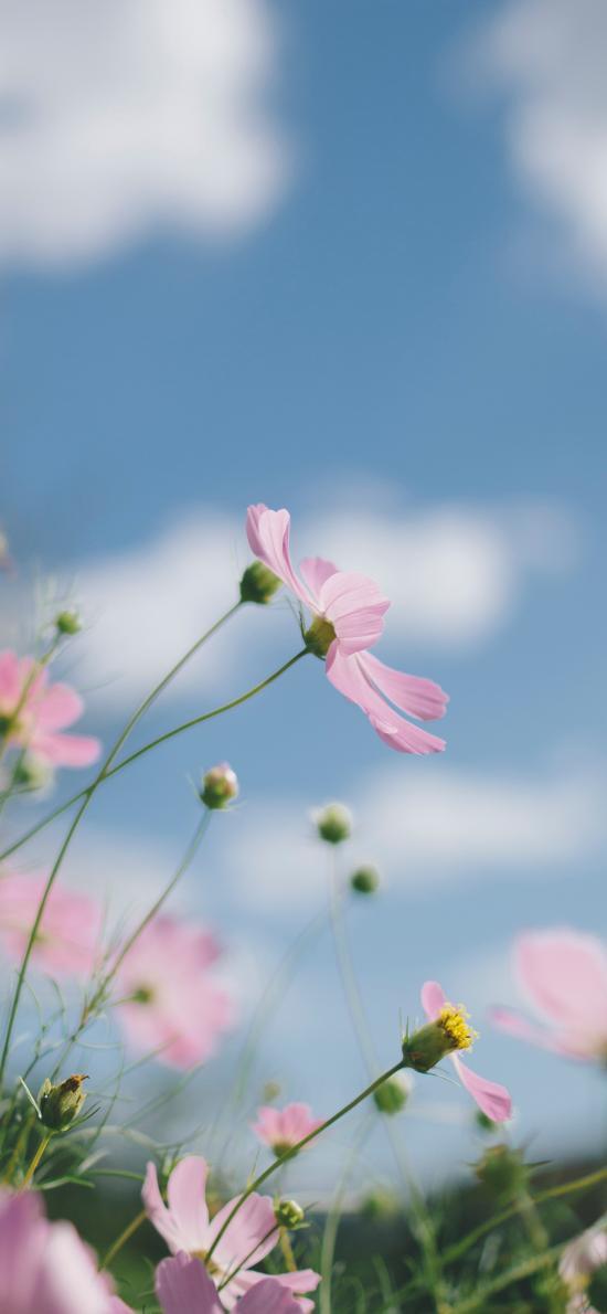 草地 花叢 野花 戶外