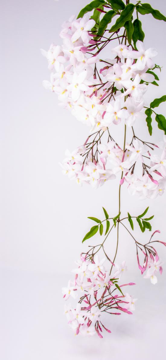 鮮花 花簇 枝葉盛開