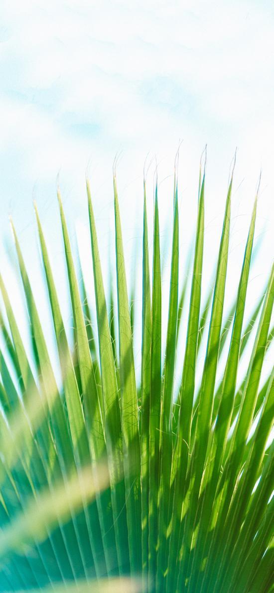 樹木 葉子 鳳尾葉 綠化