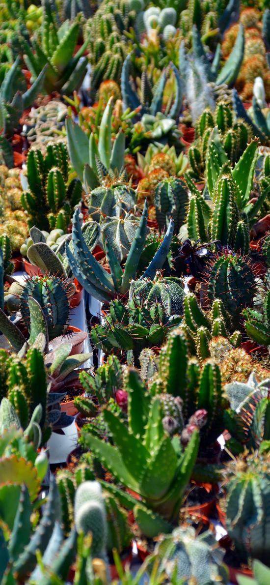 多肉 仙人掌 刺 植被 种植 绿色