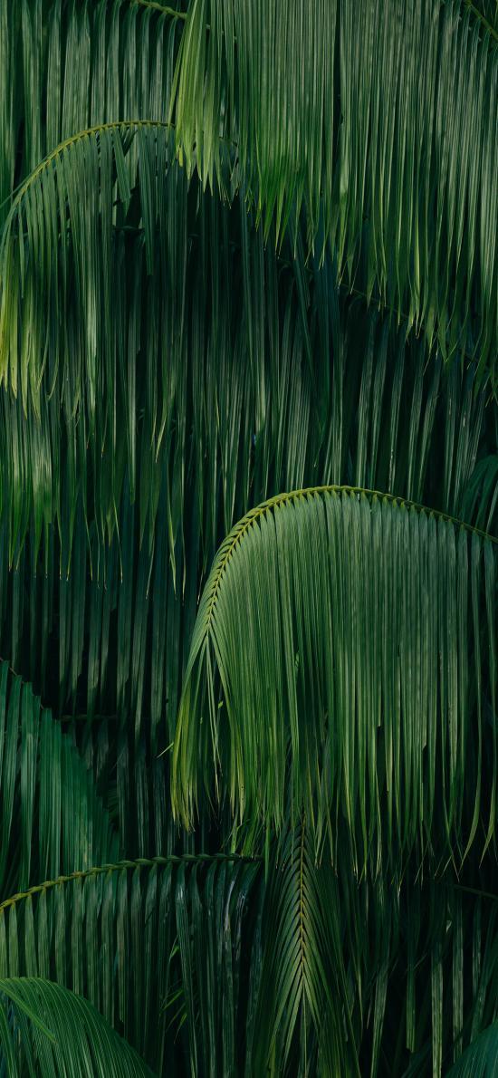 叶子 下垂 绿色 植被