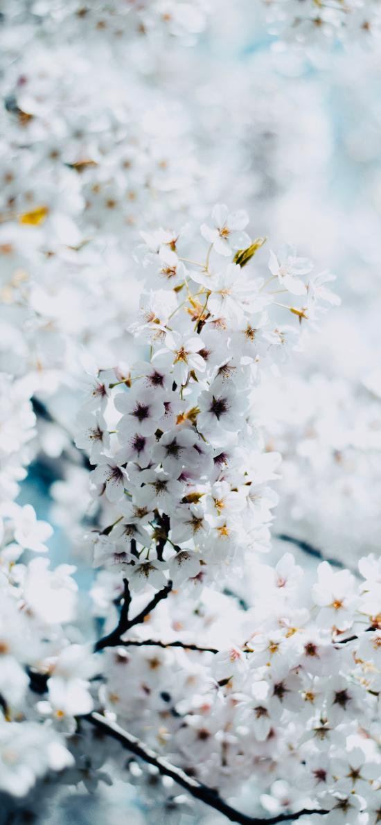 鲜花 枝头 花团锦簇 盛开