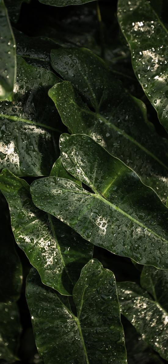 綠植 暗綠 水珠 綠葉