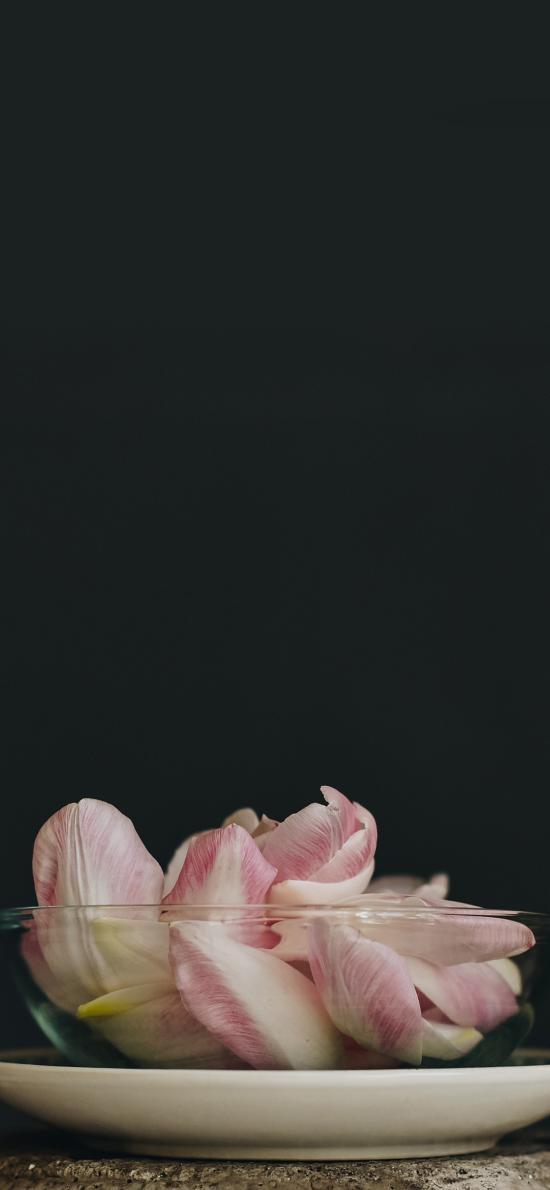 花瓣 鮮花 玻璃碗 粉