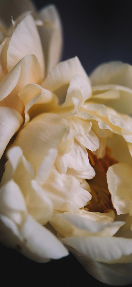 鮮花 花朵 花瓣 層疊