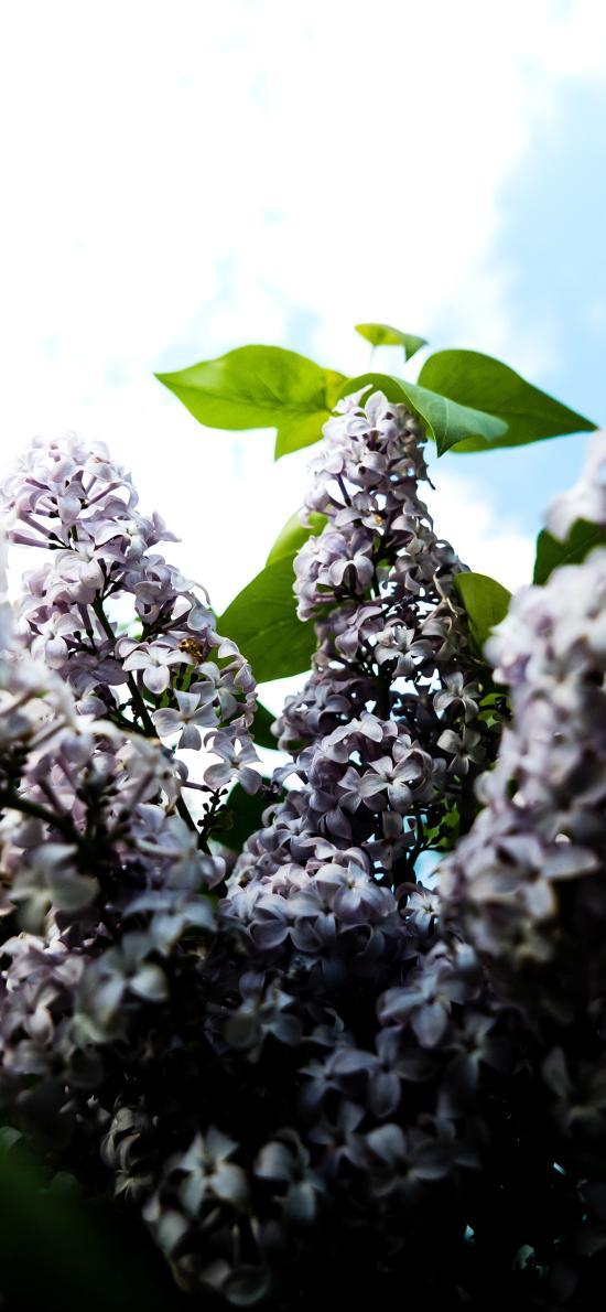 藍天白云 鮮花 粉色 一簇 綠葉
