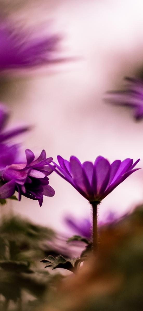 花叢 紫色 鮮花 盛開
