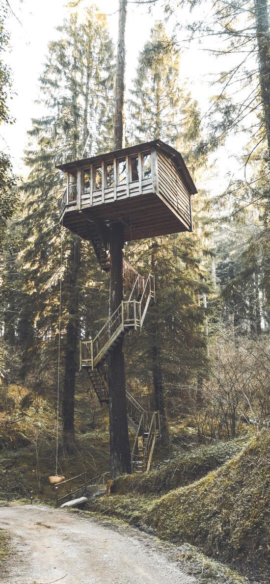 树屋 森林 建造 阶梯
