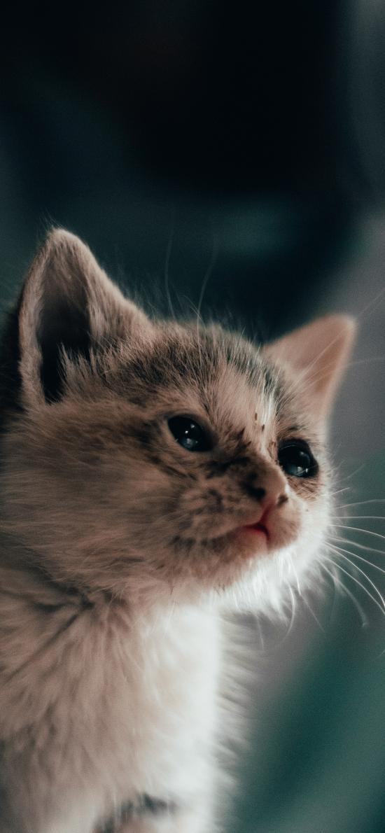 猫咪 小猫 皮毛 可爱