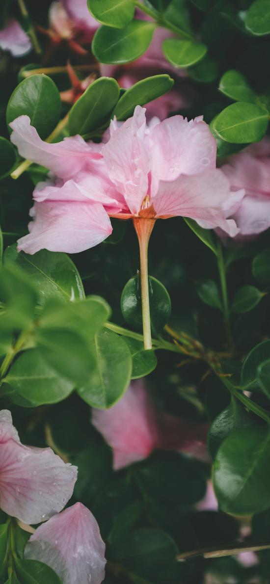 枝叶 鲜花 粉色 盛开