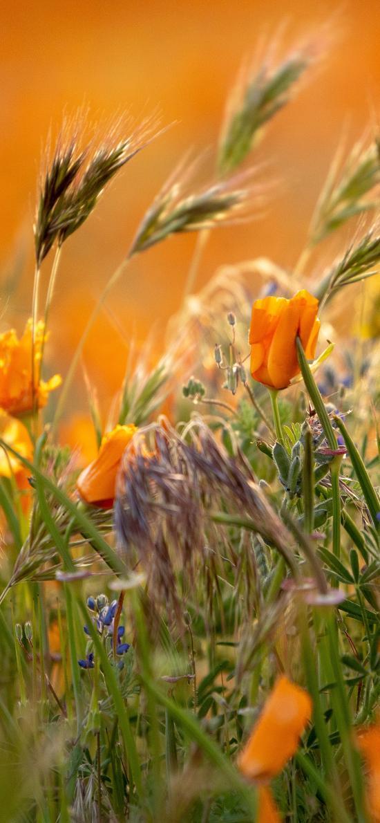 花丛 鲜花 黄色 绿草