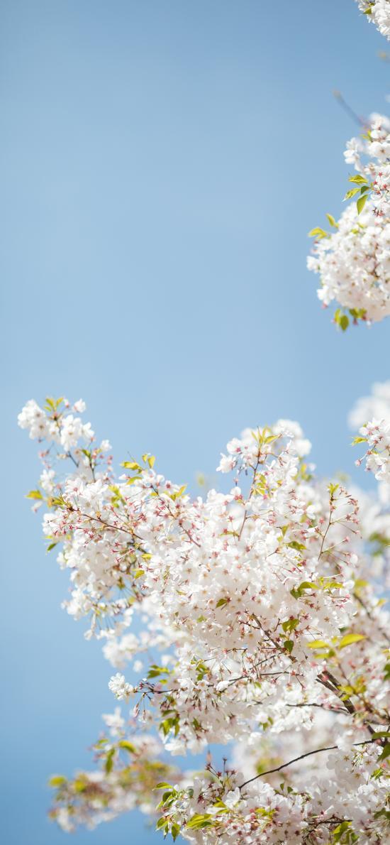 树木 白色 鲜花 小花 清新 唯美