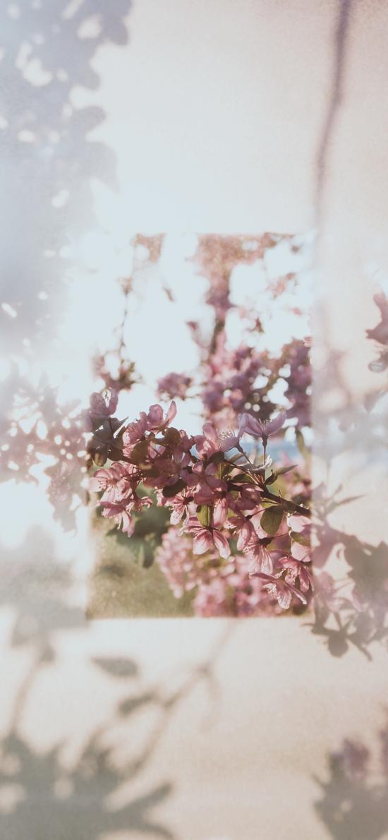 鲜花 枝头 盛开 粉色 朦胧