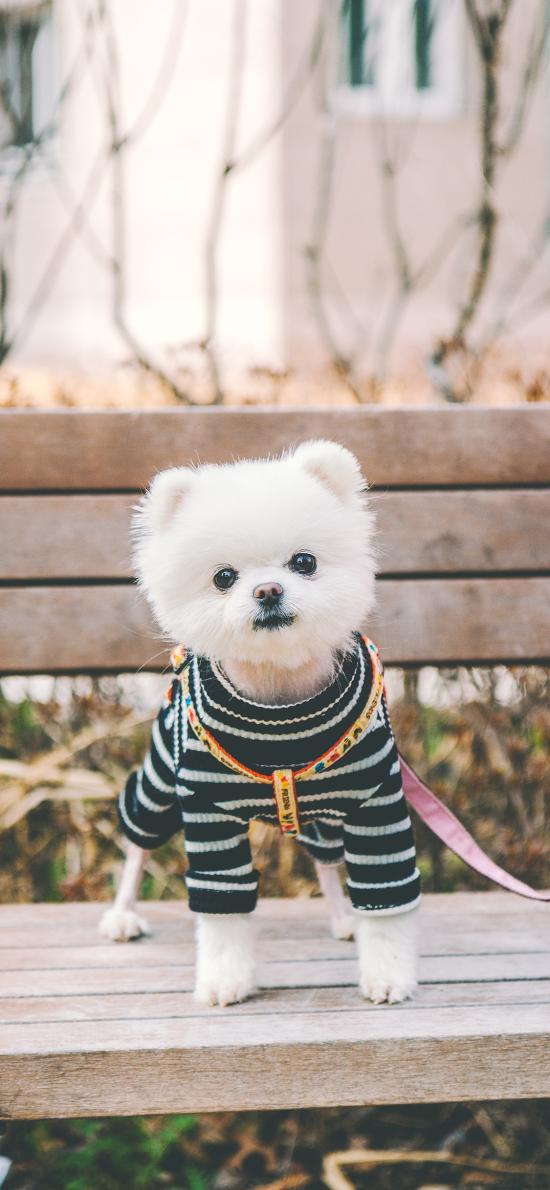 博美 宠物 木椅 服饰 犬类