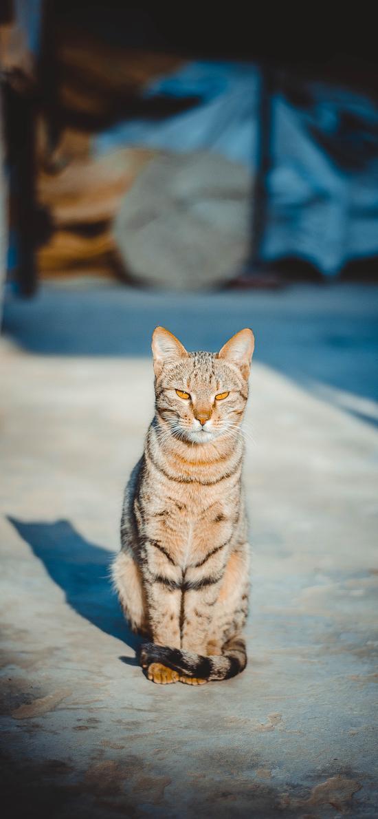 猫咪 宠物 凶狠 眼神
