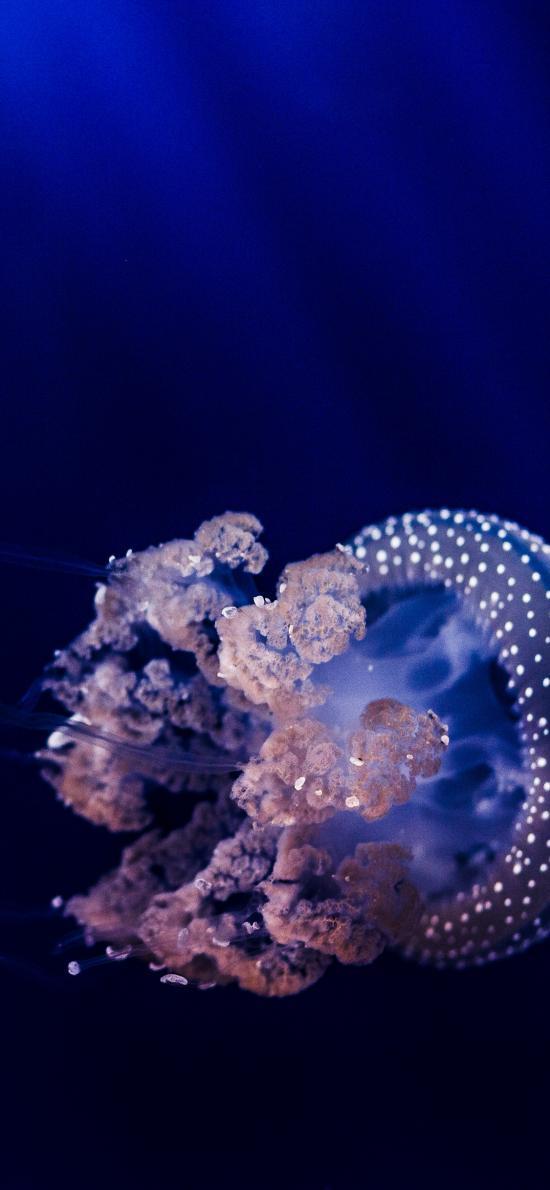 水母 触手 浮游 海洋