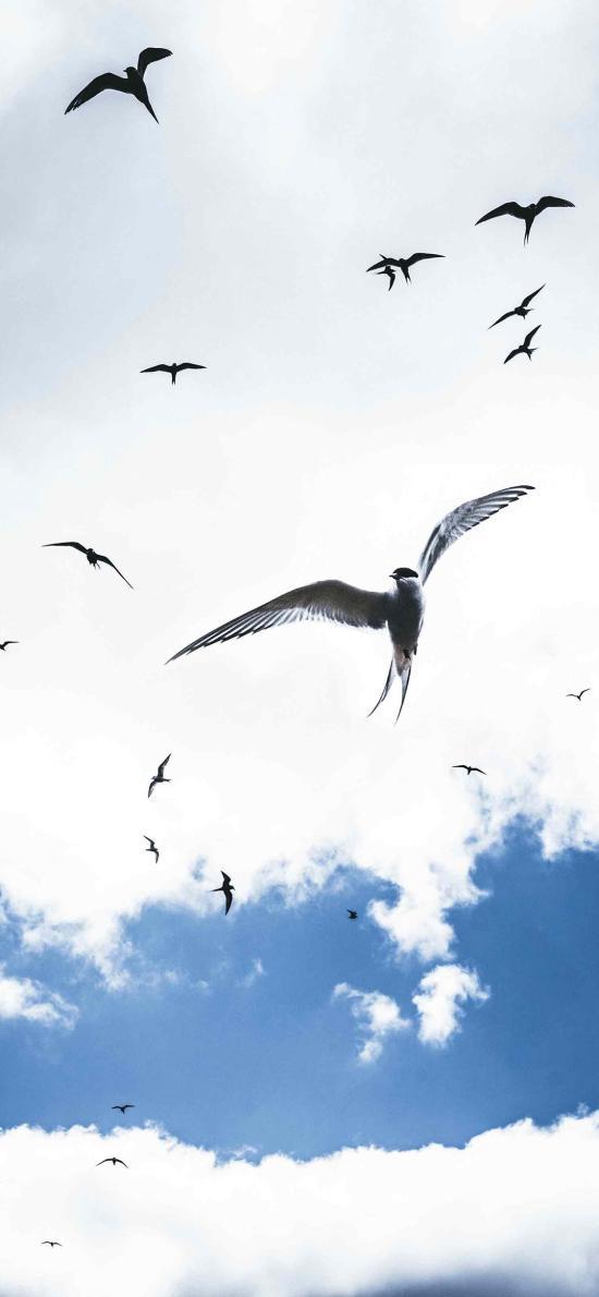 飞鸟 鸟类 鸟群 白云