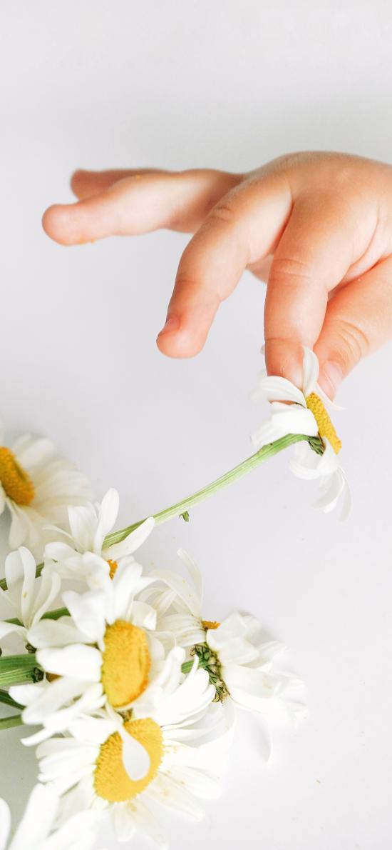 鲜花 手部 摘花 雏菊
