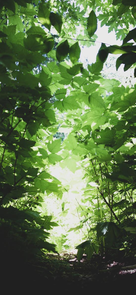树木 茂密 郁郁葱葱 小道