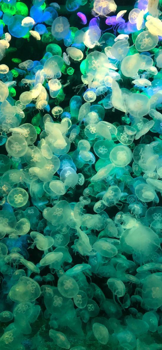 水母 密集 养殖 浮游
