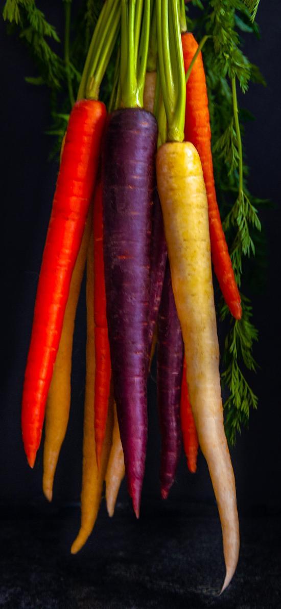 萝卜 食材色彩 细长