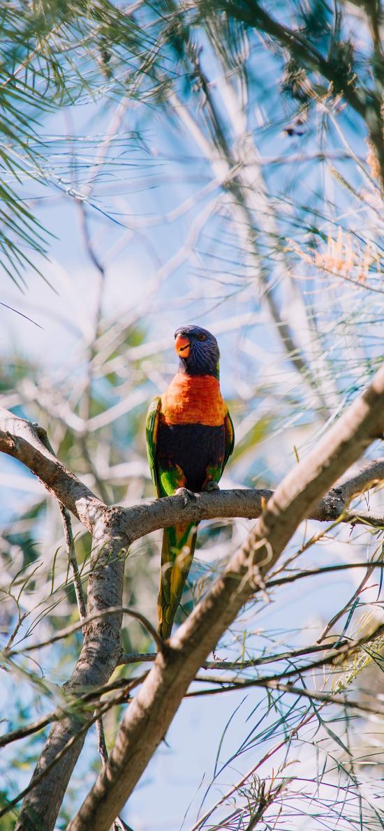 树枝 鸟类 羽毛 色彩