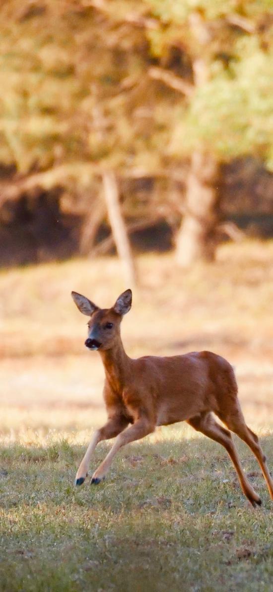 鹿 跳跃 草地 野外